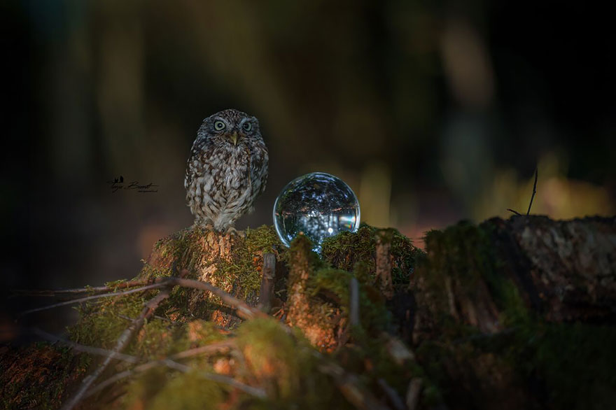 owl-and-mushrooms-tanja-brandt-10