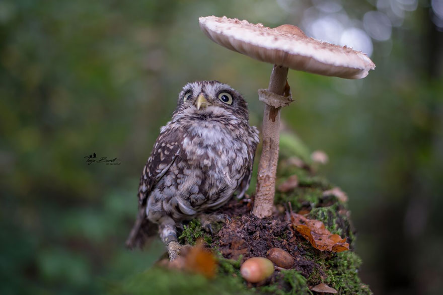 owl-and-mushrooms-tanja-brandt-11