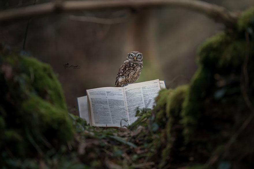 owl-and-mushrooms-tanja-brandt-9
