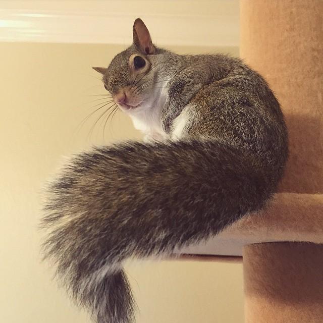 photogenic-rescue-squirrel-jill-38