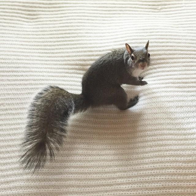photogenic-rescue-squirrel-jill-73
