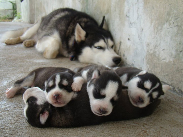 Proud Mommy With Her Puppies