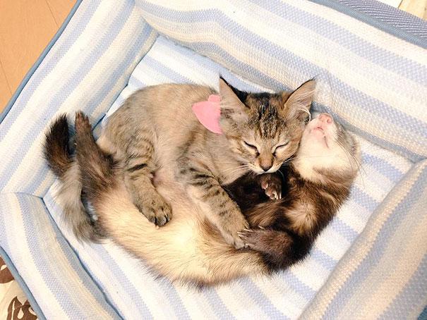 rescue-gattino-Komari-Ferret-fratelli-42