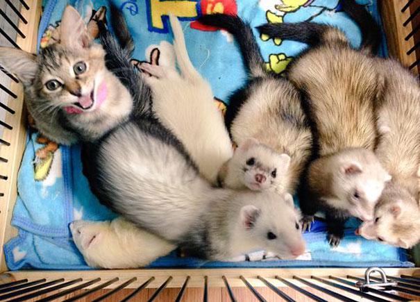 rescue-gattino-Komari-Ferret-fratelli-55