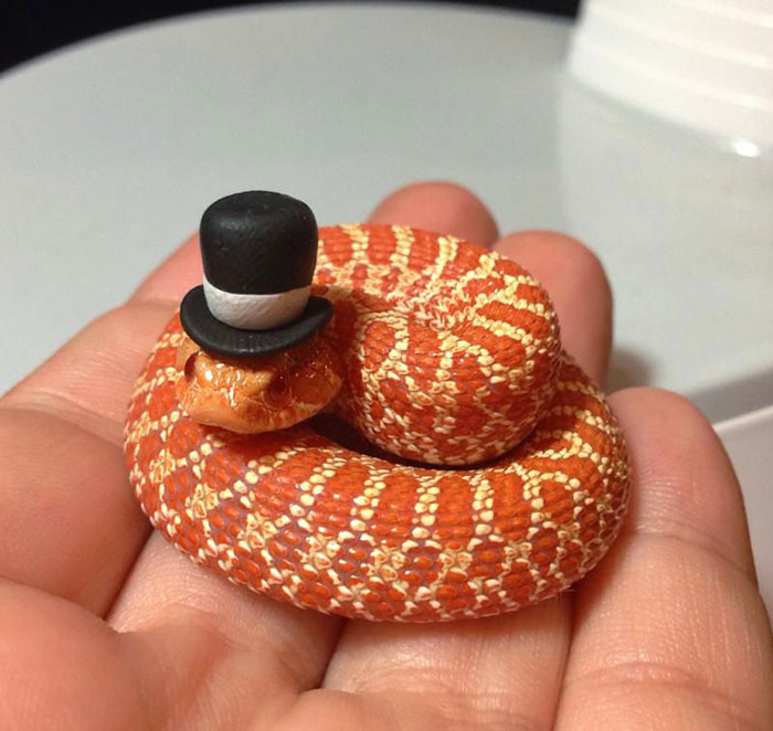 Just A Tiny Snake Wearing A Tiny Top Hat