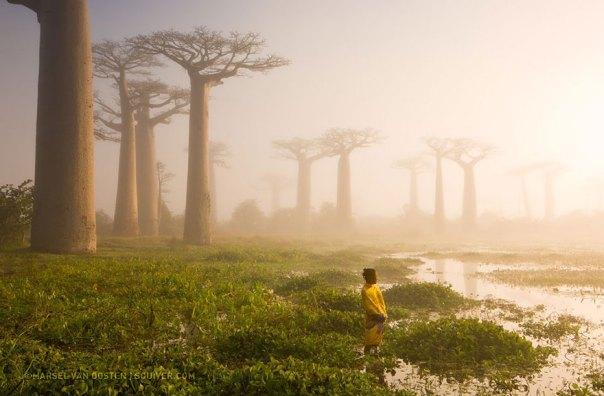 Madre de la Selva, Madagascar