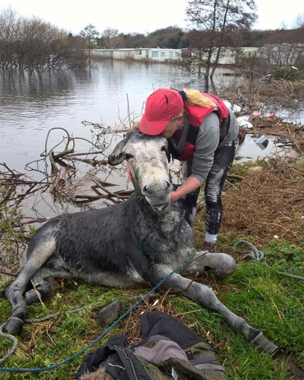 rescued-donkey-smiling-fall-river-flood-mike-ireland-62