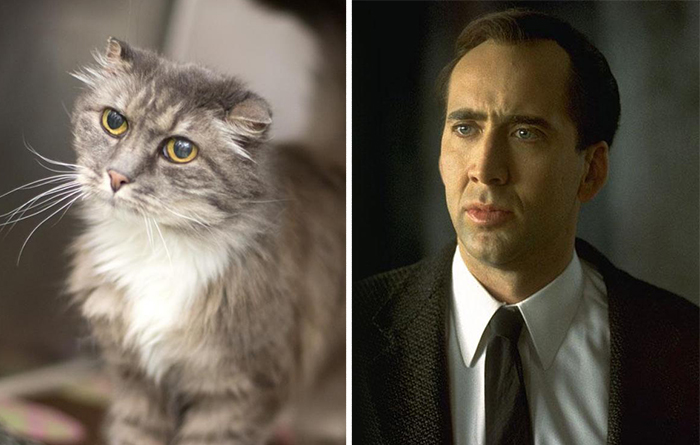 10+ Animals That Totally Look Like Celebrities