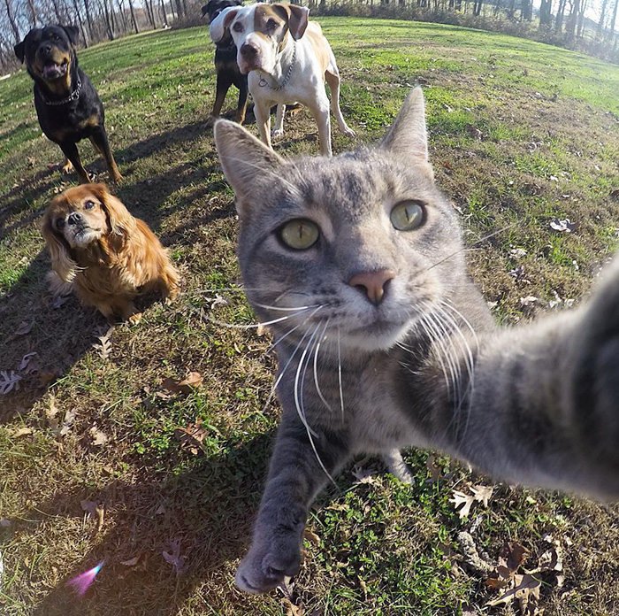 manny cat takes selfies dogs gopro 9 - It Was An Ordinary Day When His Cat Started To Take Selfies