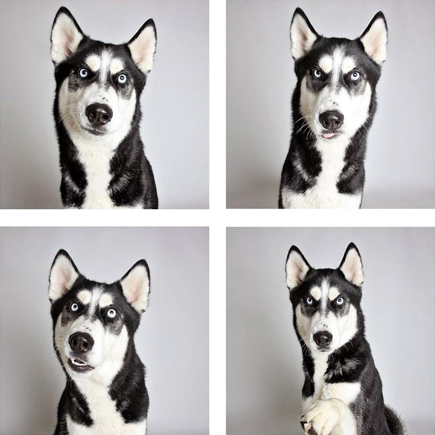 web-humane-society-utah-dog-photobooth