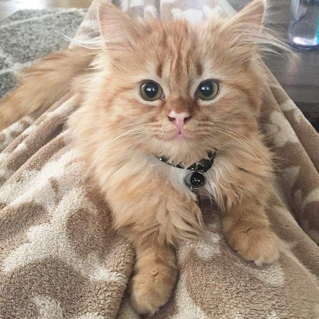 smiling-cat-shelter-adopted-coen-ava-rey-16