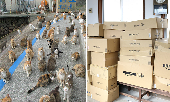 Japan's Cat Island Asks Internet For Food, Gets More Than They Can Store