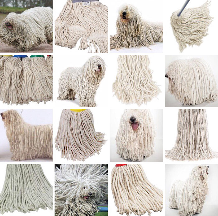 Sheepdog Or Mop?