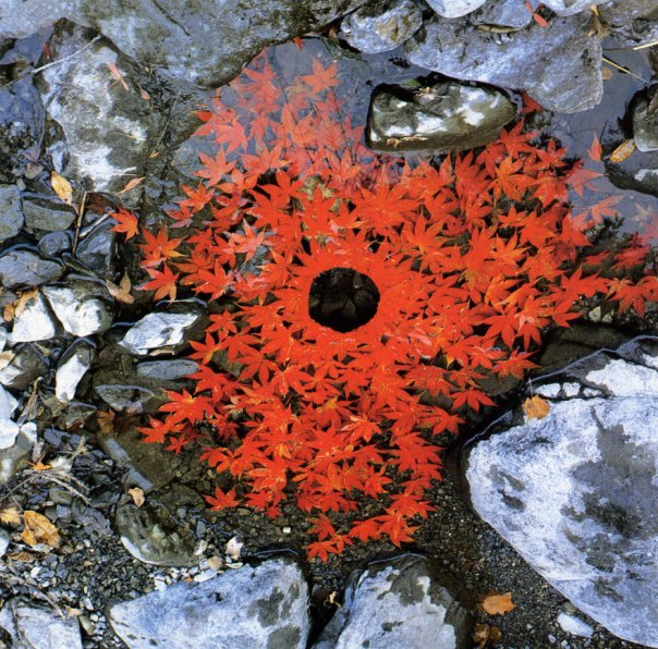 land-art-andy-goldsworthy-6