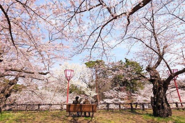 primavera, Japón y la cereza-flores-national-geographics-16