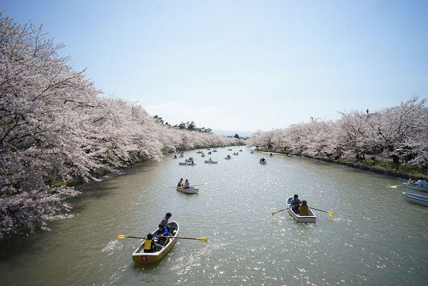 spring-japan-cherry-blossoms-national-geographics-23