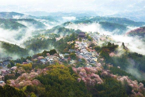 primavera, Japón y la cereza-flores-national-geographics-24