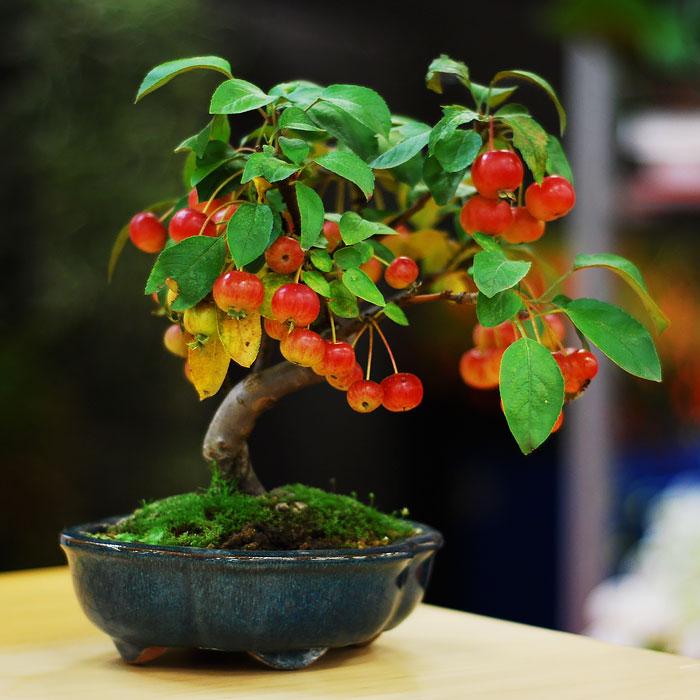 15 από τα πιο όμορφα μπονσάι που έχετε δει