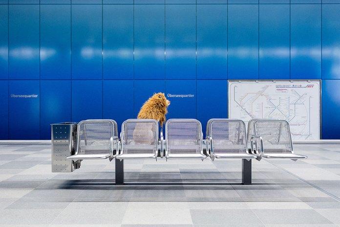 stray-dog-big-city-lion-grossstadtlowe-julia-marie-werner-10