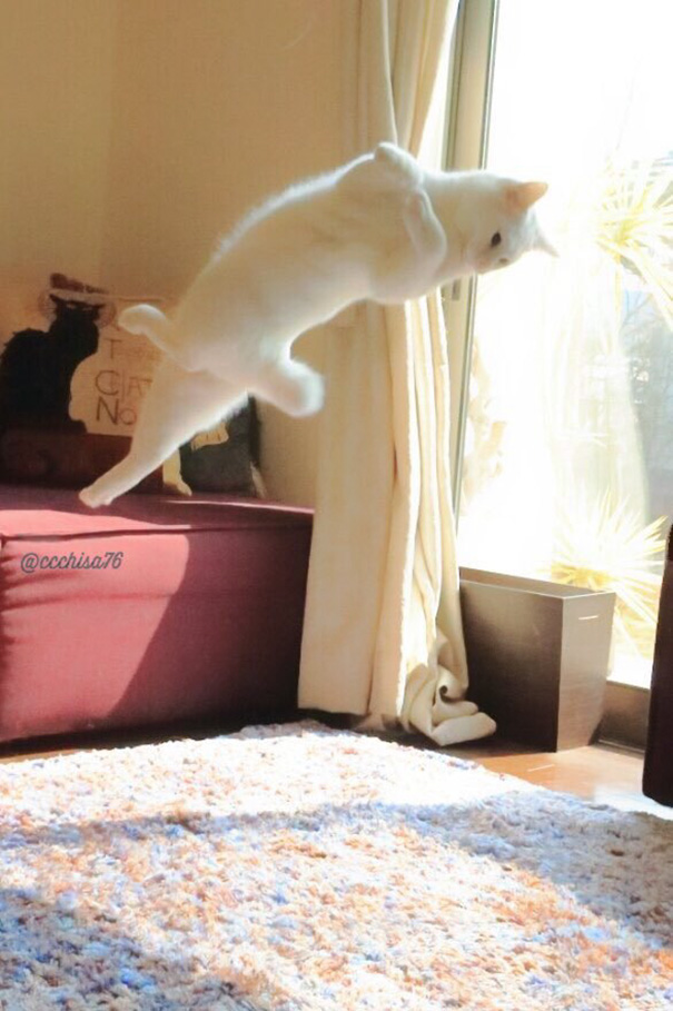 ballet cat japan 45 - Cat Is Home Alone. Guess What? It's Dance Time!