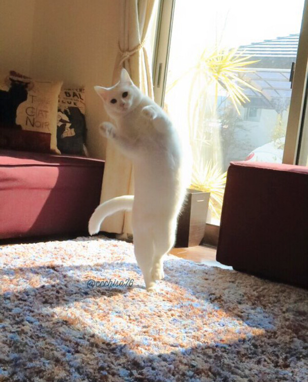 ballet cat japan 46 - Cat Is Home Alone. Guess What? It's Dance Time!
