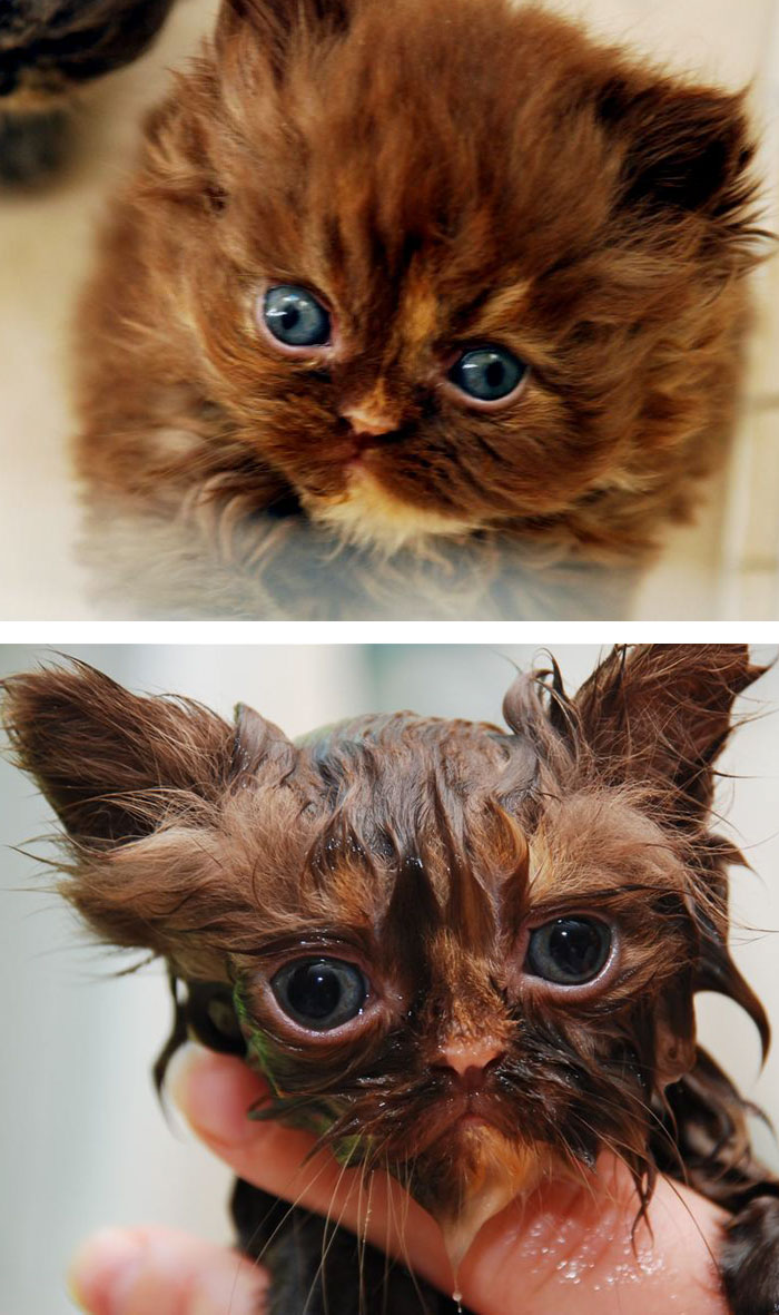 Before Vs. After Bath