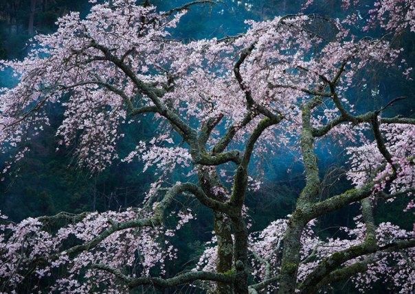 Fascinación, Japón