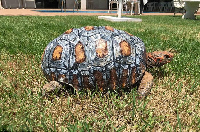 tortoise-3d-printed-shell-freddy-4
