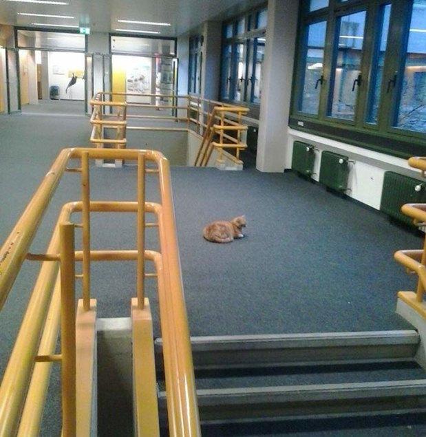 campus-cat-university-cuddles-augsburg-germany-18