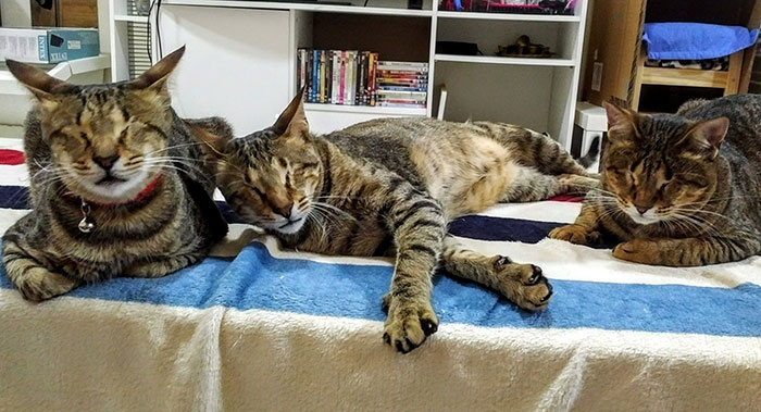 Nobody Wanted These 3 Blind Cats, Until This Woman Decided To Adopt Them