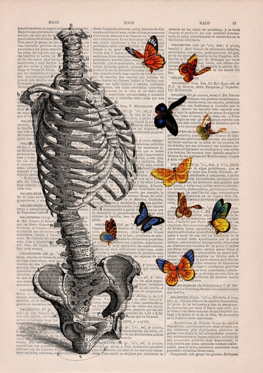 Floral Anatomical Illustrations Breathe New Life Into Old ...
