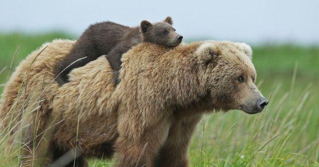 56 Un-Bear-Ably Cute Momma Bears Teaching Their Teddy Bears How To ...