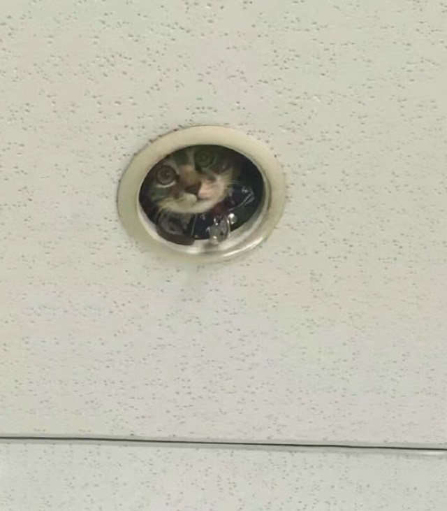 office-ceiling-cat-monitoring-omocha-no-uma-2