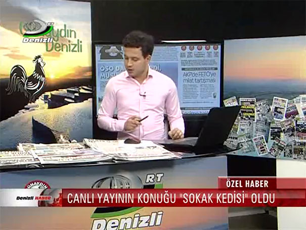 stray-cat-live-tv-news-turkey-3