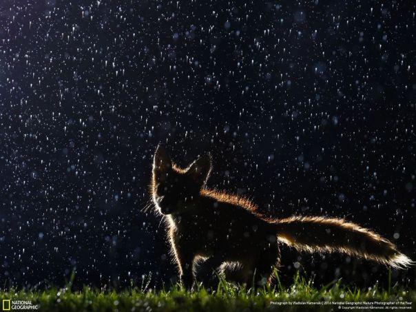 Bailando en la lluvia