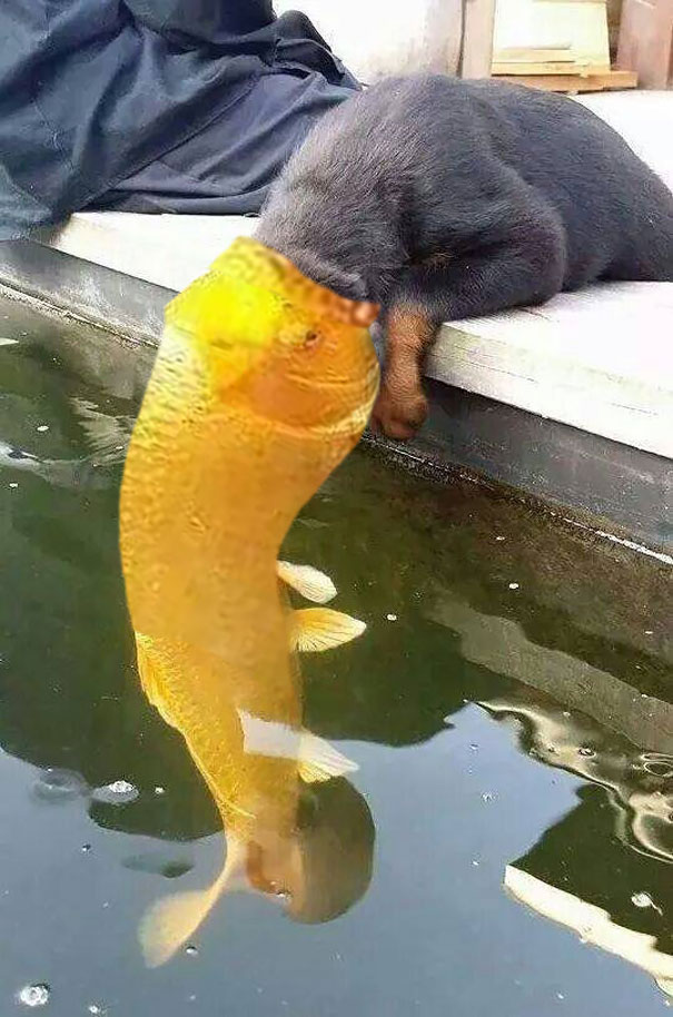 Funny Pictures Romantic Kiss