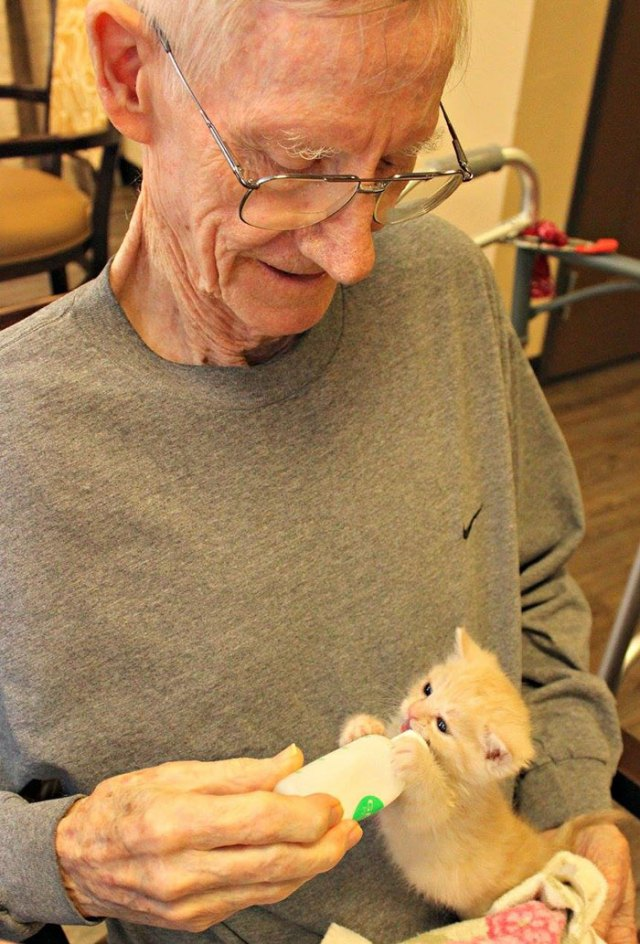 retirement-home-shelter-cats-2