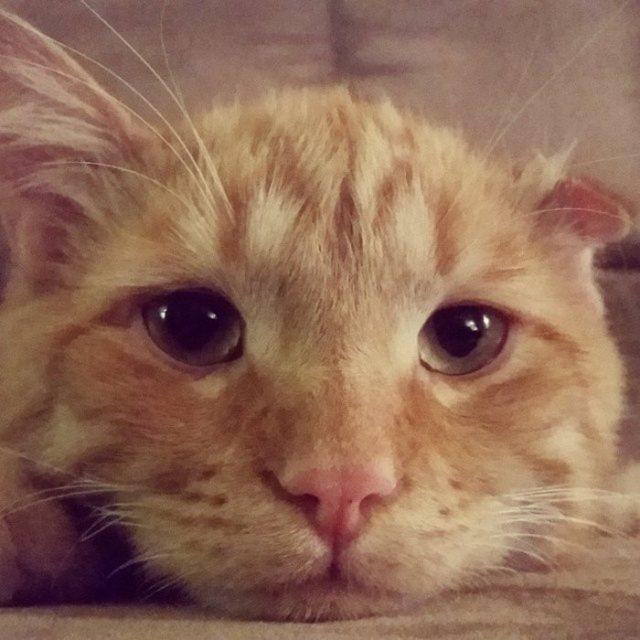 saddest-shelter-cat-benben-transformation-13