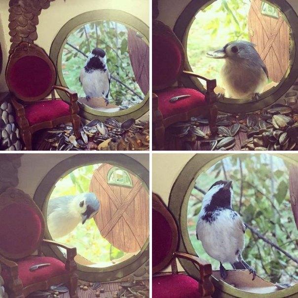 tiny-pájaro-amigos-casas-jada-Fitch -10