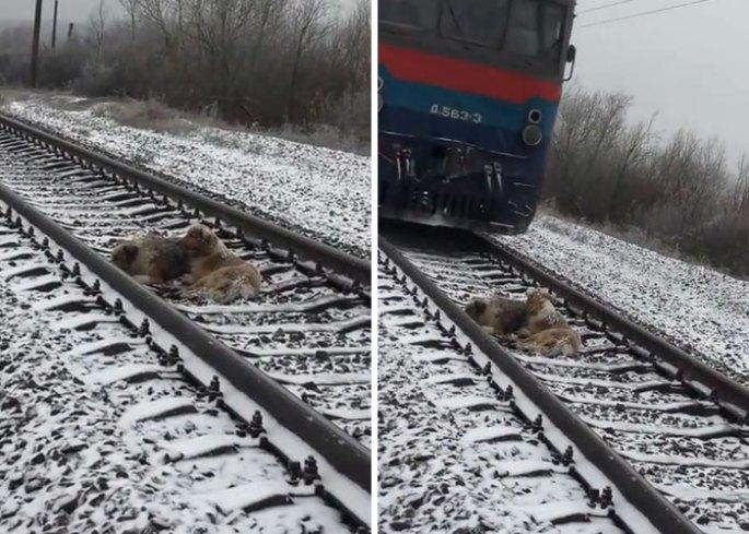 dogs-train-railway-tracks-ukraine-1