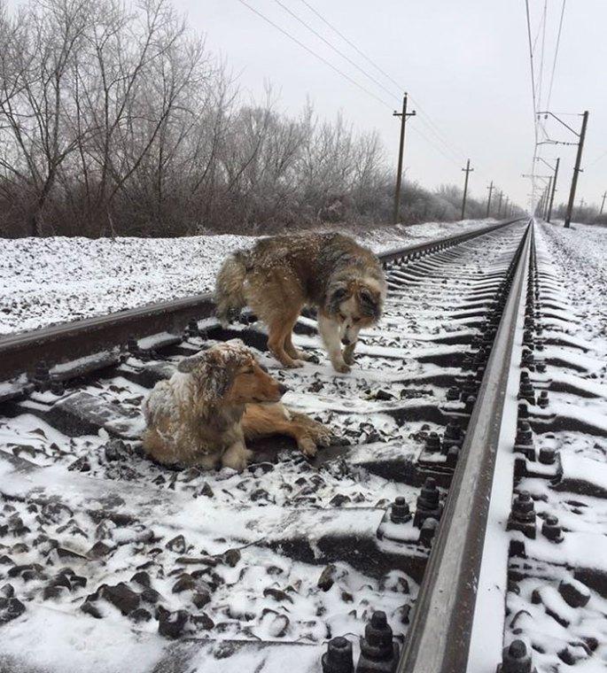 dogs-train-railway-tracks-ukraine-2