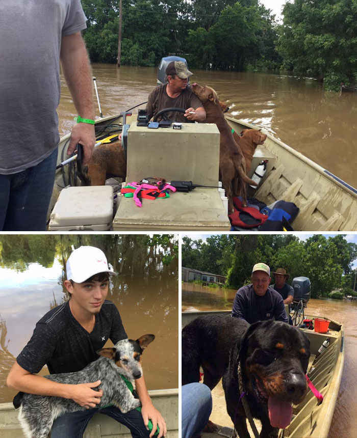 Dad And Son Rescued 30 Dogs Left Behind During The Flood