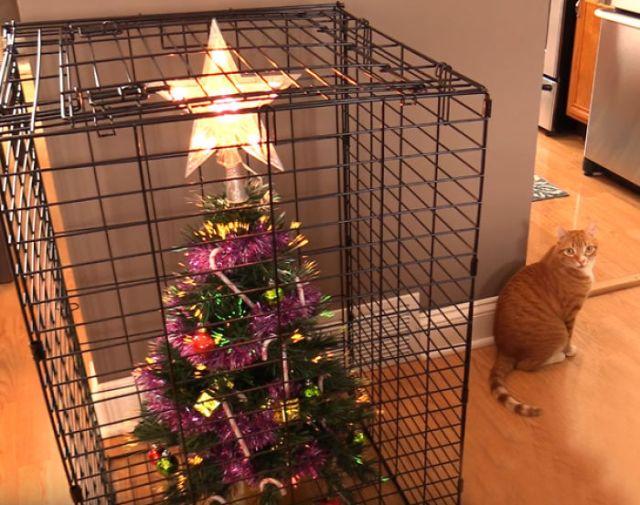 ¿Cómo Proteger De Tu Gato Un Árbol De Navidad? Utiliza Una Jaula. Para El Árbol