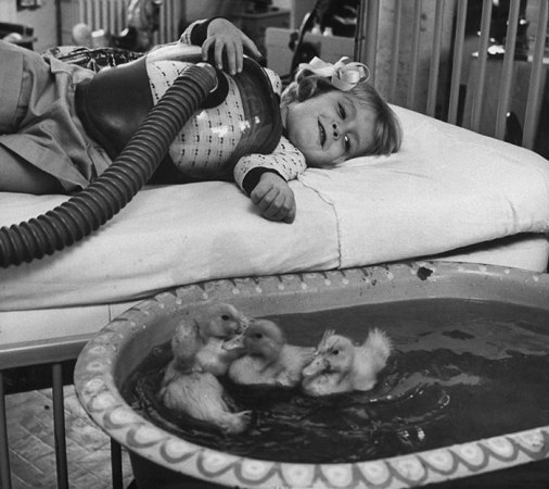 10  Of The Most Heartwarming Historic Photos Ever   Bored Panda  9 Animals Being Used As Part Of Medical Therapy  1956