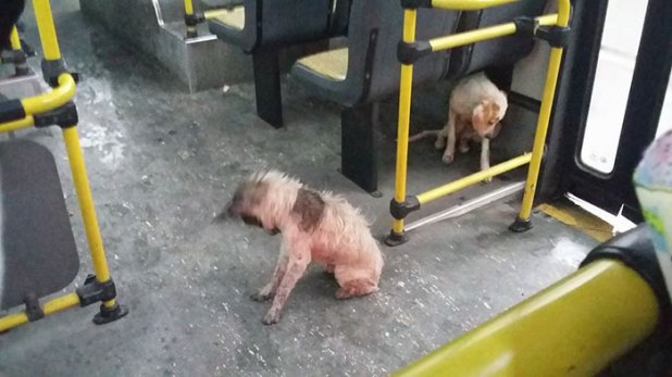 bus-driver-two-stray-dogs-ride-thunderstorm-argentina-1