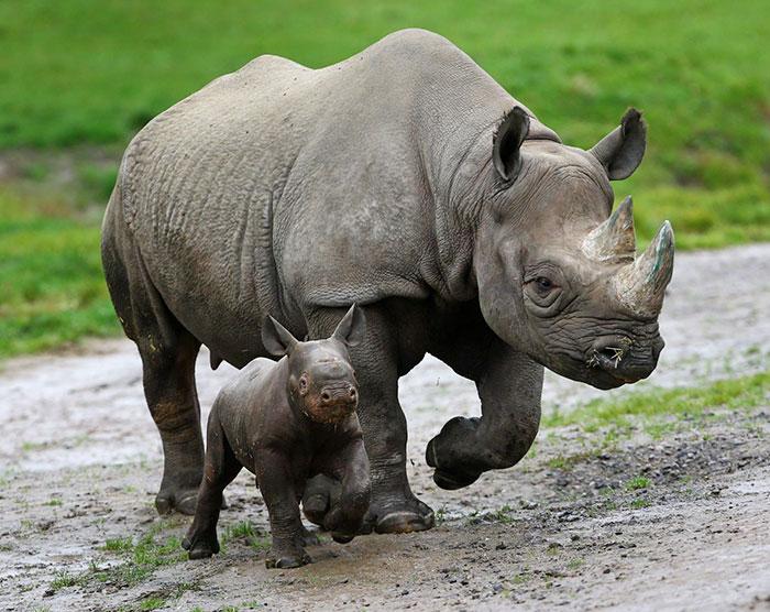 national-park-shoots-people-protects-rhinos-kaziranga-12