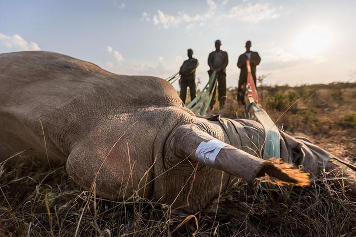 national-park-shoots-people-protects-rhinos-kaziranga-15
