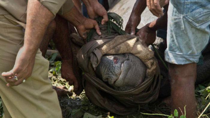 national-park-shoots-people-protects-rhinos-kaziranga-2