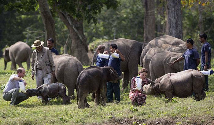 national-park-shoots-people-protects-rhinos-kaziranga-6
