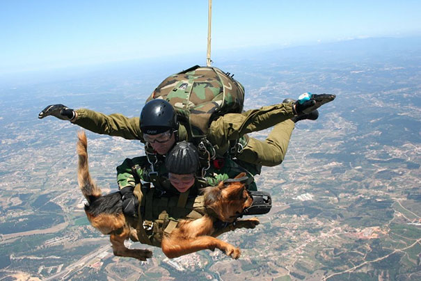 Military Paratrooper Dog